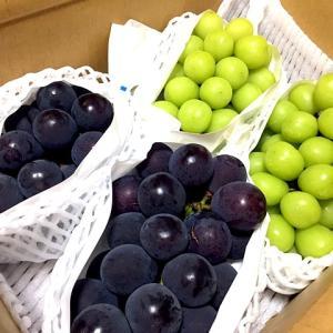 長野県のY・A様から葡萄が届きました!
