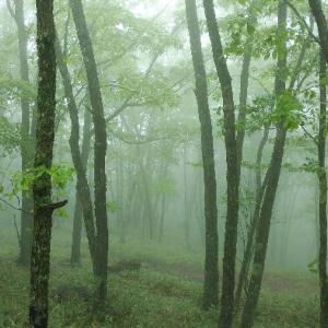霧に包まれて。