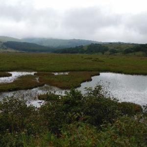 八島湿原散策