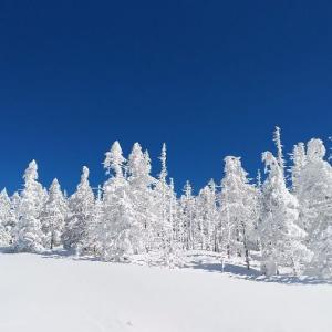 雪質抜群、天気最高・・・ v (^o^)