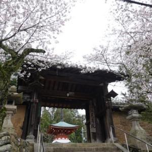 九度山暮らしのある日、九度山に桜が咲いて鶯鳴いてる。