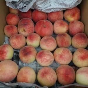 九度山暮らしのある日、桃の季節がやってきた。果夢果夢バザールで桃を買う。