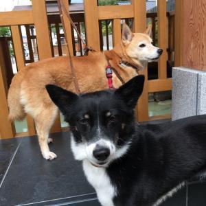 旅する柴犬 キャンピングカーで道の駅巡り 1 of Day4