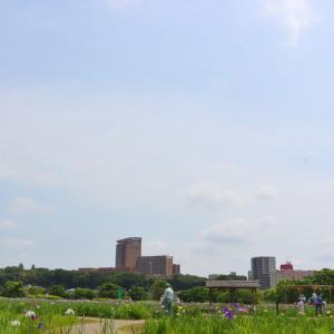 小岩菖蒲園 〜紫陽花〜