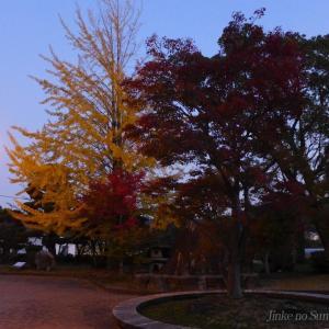 伊藤公記念公園のライトアップ
