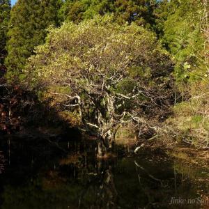 水中に立つ木・・・
