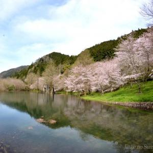 ふれあいパーク大原湖の桜 2020.03.29