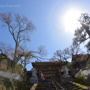 西宗寺の大ヤマザクラ 2020.03.29