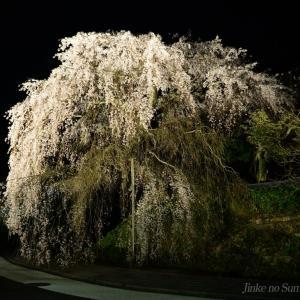 鹿野の弾正糸桜 2020.04.02