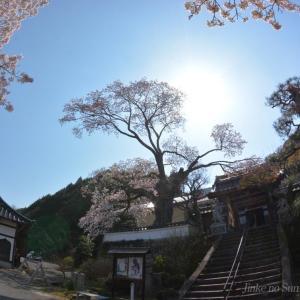 西宗寺の大ヤマザクラ 2020.04.04