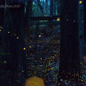 ヒメ物語 2020 ・・・ Episode17