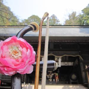 桜の風~河口浅間神社ご奉納