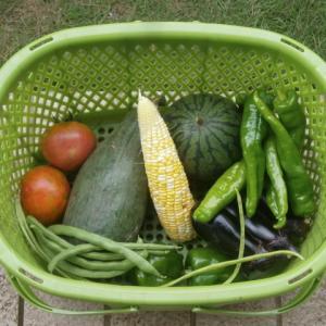 夏野菜の収穫など