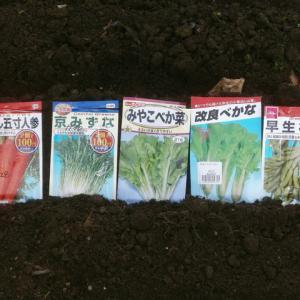 秋用の葉物野菜のチョコ蒔き開始