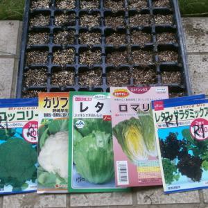 秋用野菜の種蒔き開始など