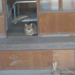通りすがりに出会った猫