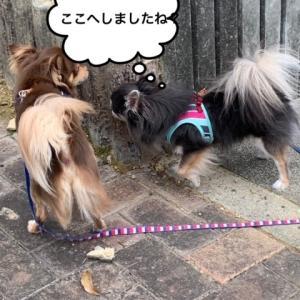 風も静かになったよヾ(*´∀`*)ノ