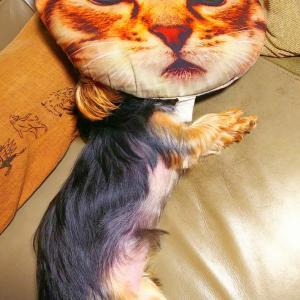 猫なのか犬なのかハッキリしろ~www