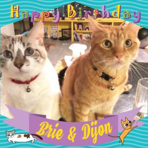 Happy Birthday♥ニャンズのお誕生会2021