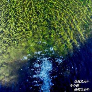 記憶画像 2008年1月28日 運動公園ー池