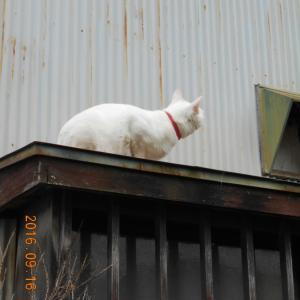 そう言えば猫は高い処に行くのが好きだった
