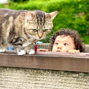 猫に一番近く会えた日。