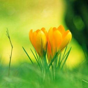 1月24日の花。。