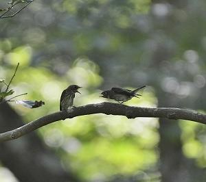 久しぶりの探鳥