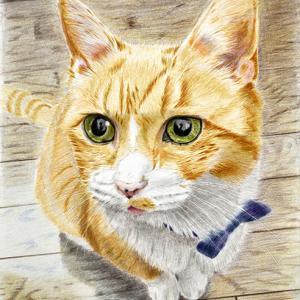 猫が自分で描けました