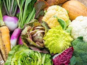 ■国産!!イタリアン野菜③カーボロ・ネロ