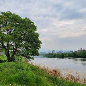 5月の桂川