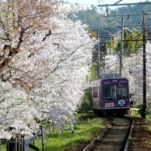 嵐山桜2021