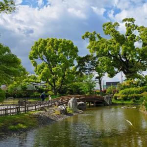 高槻城、黄ショウブの小寺池