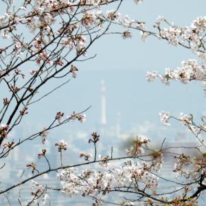 桜の大河内山荘