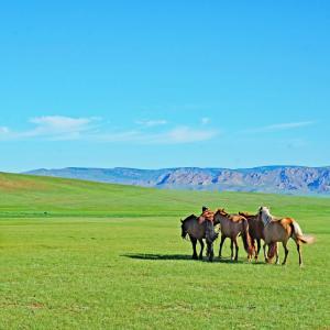 遊牧民の家(ゲル)の住み心地・・・子供と2人旅 in モンゴル