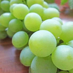 庭のブドウが今年は豊作 in ドイツ