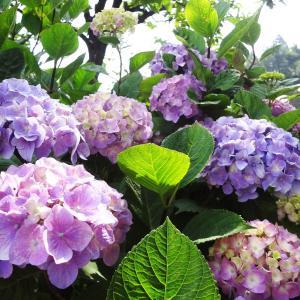 花と植物に囲まれた家 in 岐阜