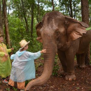 ジャングルの中をゾウと一緒に歩いた一日 in タイ
