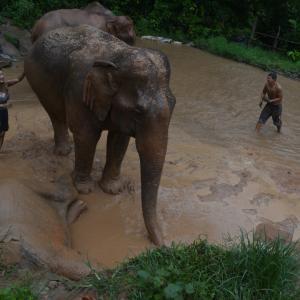 昨年はモンゴルで馬、今年はタイで象・・・子供との旅