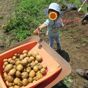 野菜の収穫☆