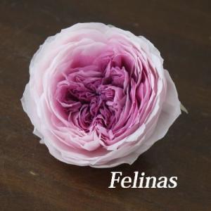 プリザ・カップ咲き開花のビフォーアフター