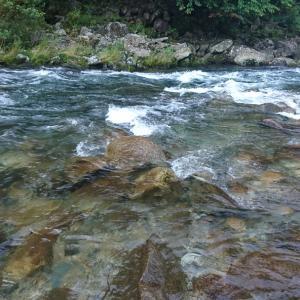 8月1日寒狭川で鮎釣り