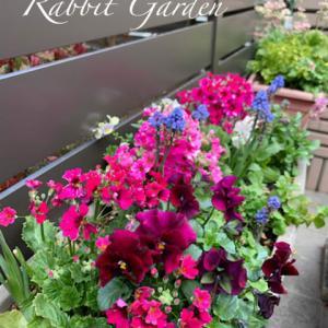 花壇メンテの日