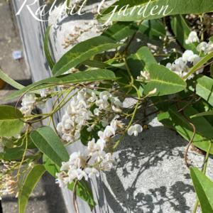 小花の寄せ植えたち +葉物