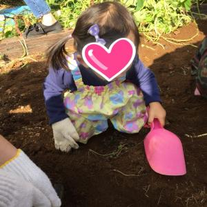 今年も芋掘りに行ってきました♡