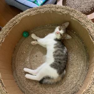 よく遊びよく眠る