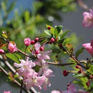 春色彩々 。。。