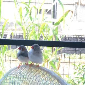 鳥も暑いんです