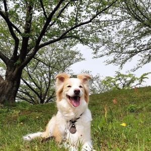 緑の木々に生きる力強さや癒しをもらえる散歩