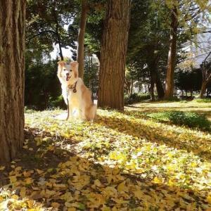 落ち葉の絨毯 🍂 秋から冬へ